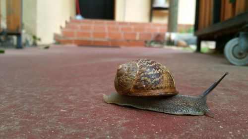 snail slow away