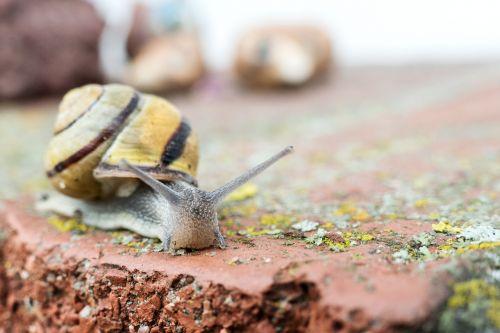 snail crawl shell