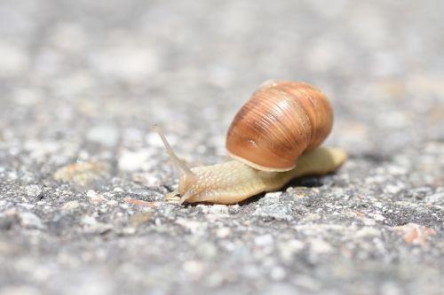 snail asphalt snail shell