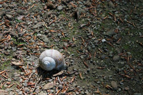 snail shell snail shells