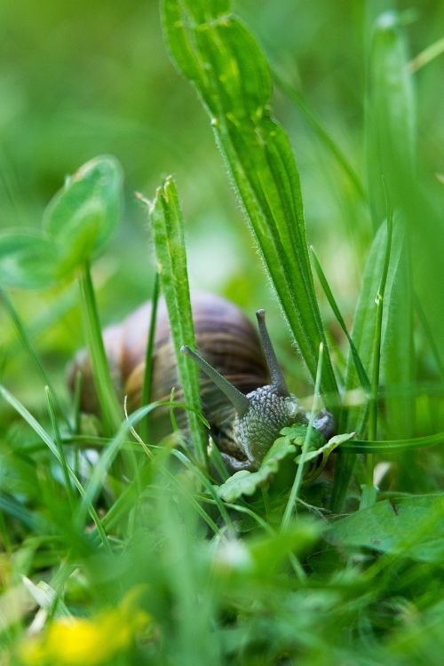 snail probe nature