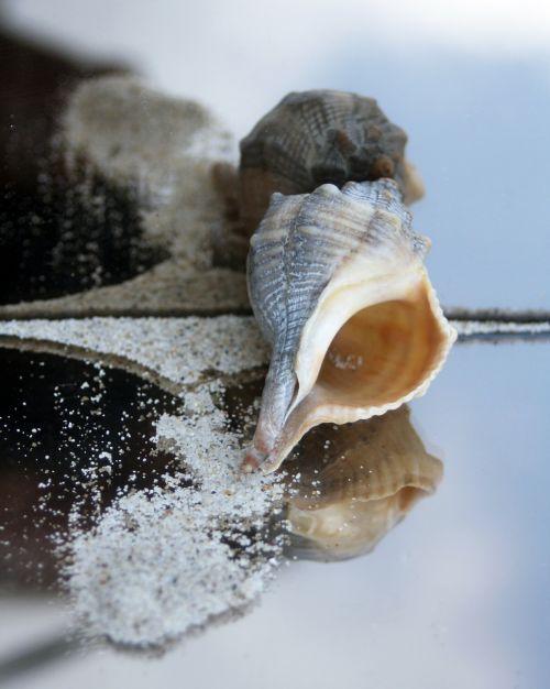 snail housing maritime