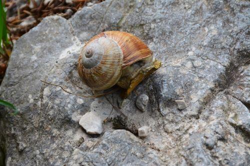 snail mollusc nature