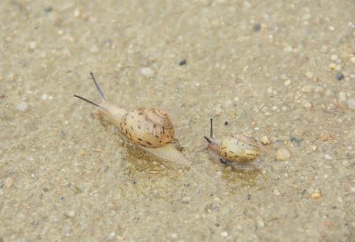 snail mollusc non