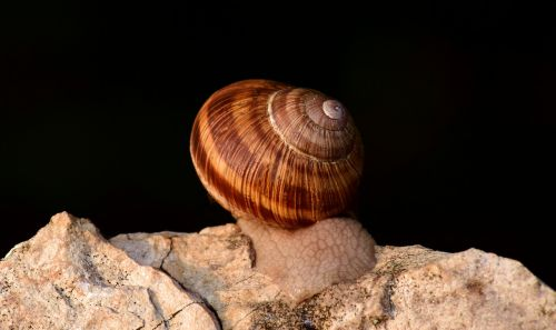 snail shell nature