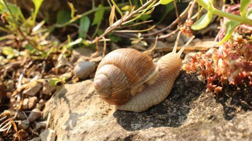 snail macro animal
