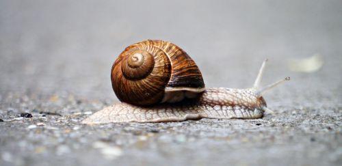 snail animal snail shell