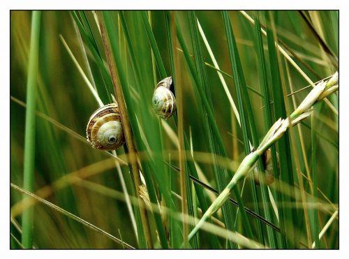 snail shell close