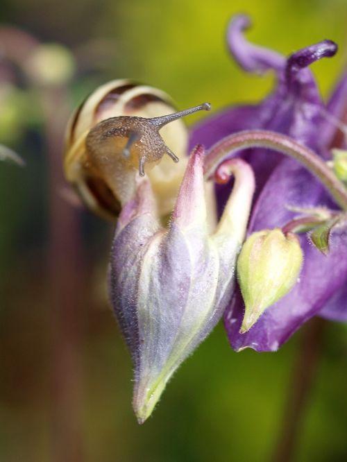 snail mollusc flower