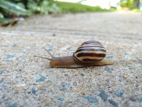 snail nature animal