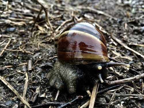 snail slow shell