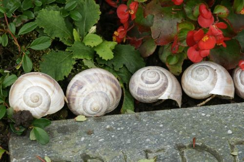 snail snail shells group