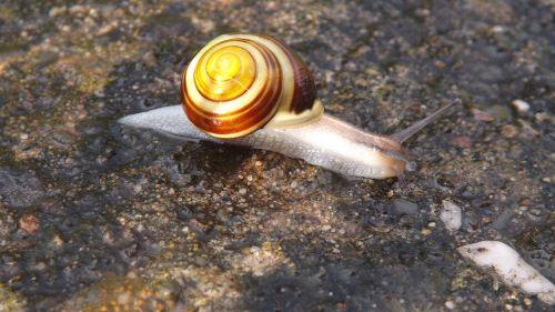 snail wet rain