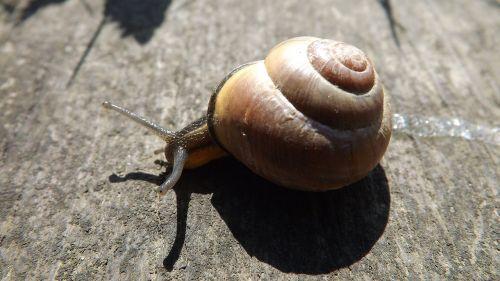 snail molluscum seashell