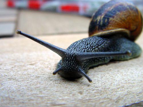 snail cochlea lettuce
