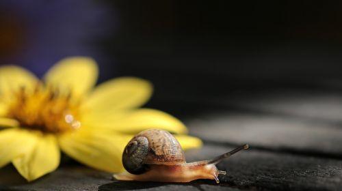 snail va-jay-jay flower