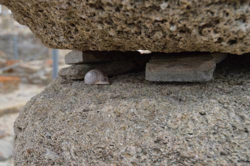 snail details stone