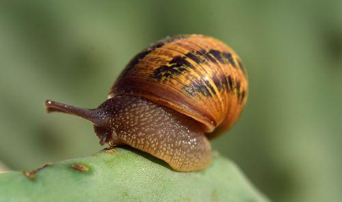 snail cactus macro