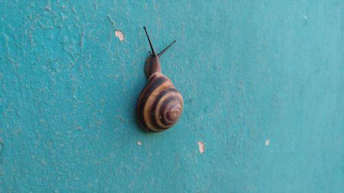 snail nature sea shells