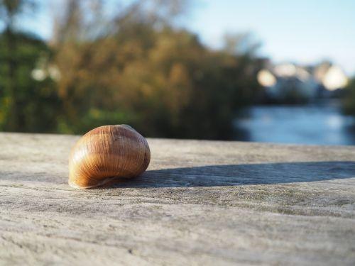 snail shell snail shell