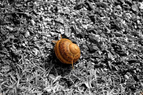 snail bi color monochrome