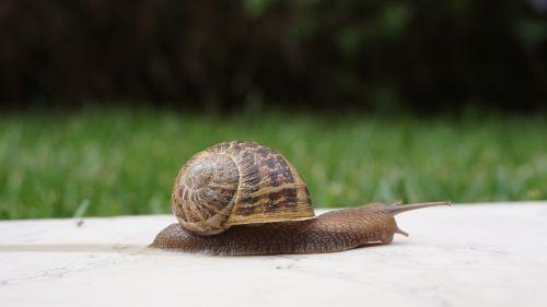 snail shell wall