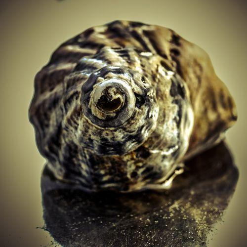 snail water mirroring
