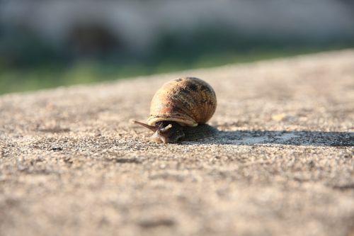 snail molluscum shell