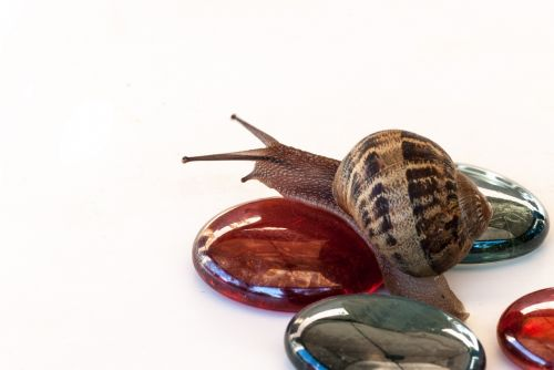 snail nature wallpaper