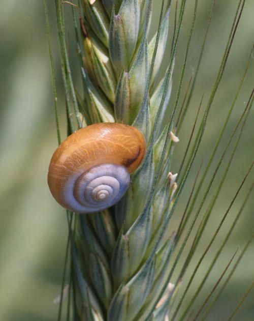 snail schalentie slowly