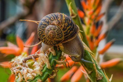 snail nature garden