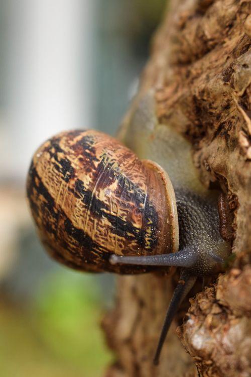 snail tree nature