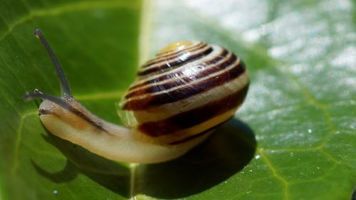 snail gastropod crustaceans
