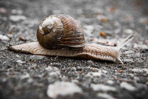 snail  slowly  bauchfuesser