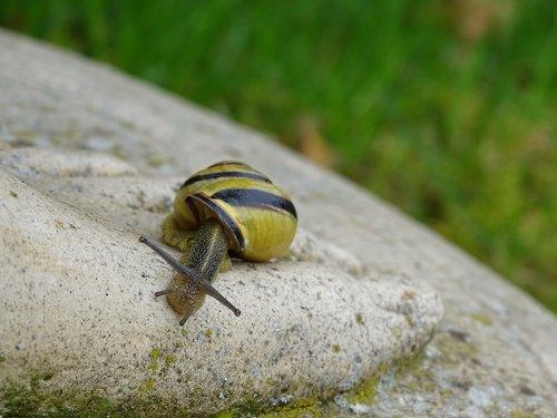 snail  shellfish  garden snail