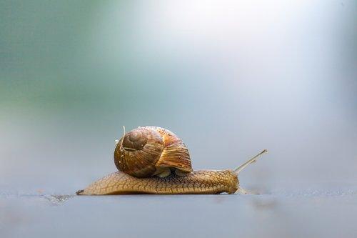 snail  nature  shellfish