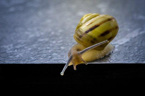 snail  shell  shellfish