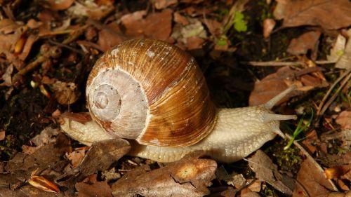 snail wirbellos animal