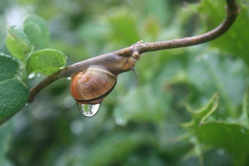 snail  rain  sweating