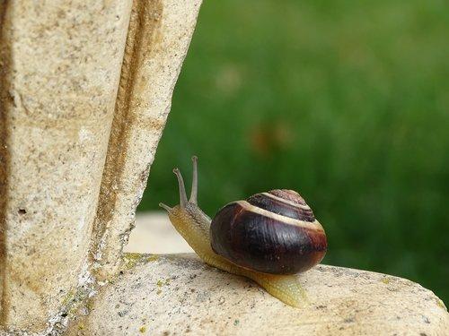 snail  shell  slowly