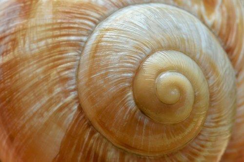 snail  shell  schalenweichtiere