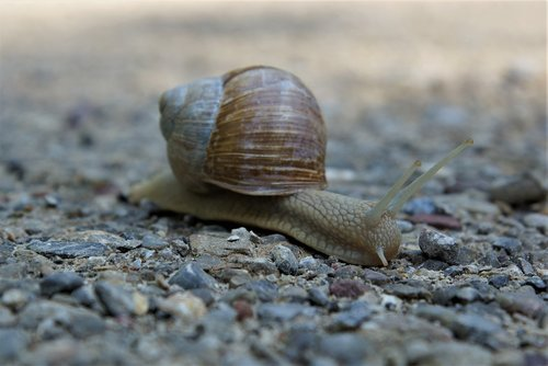 snail  crawl  slowly