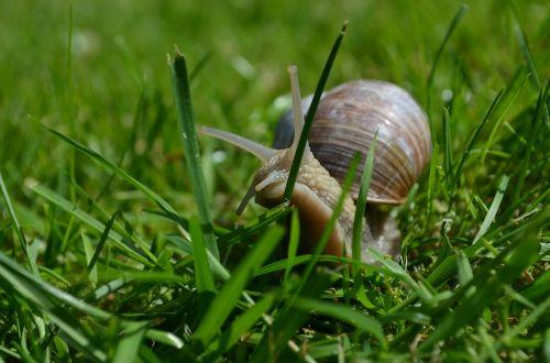 snail mollusk shell