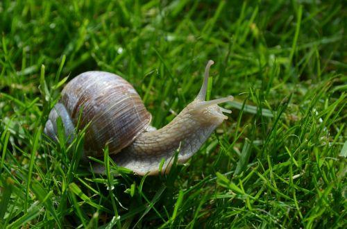 snail schnecknehaus mollusk