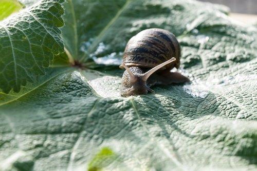 snail  leaf  nature