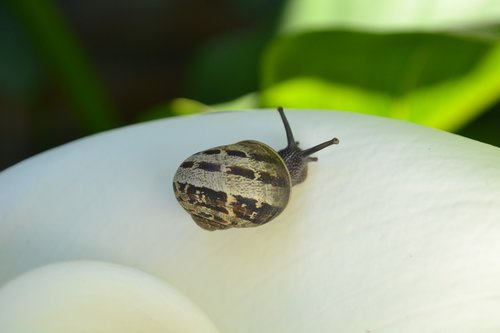 snail  flower  animal