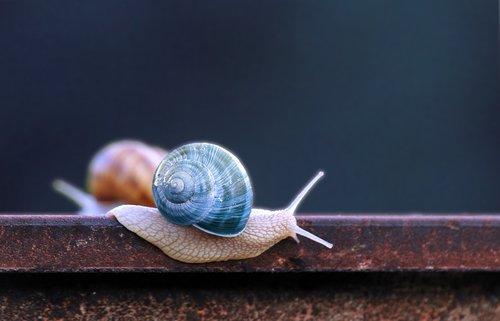 snail  blue  snail shell