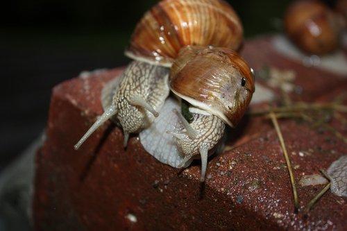snail  animal  clam