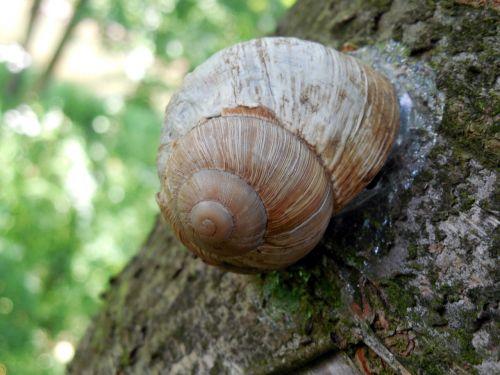 snail shell escargots