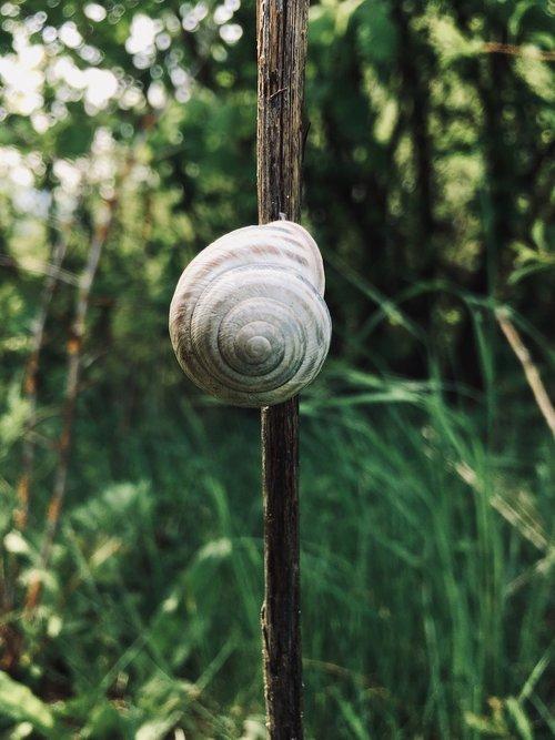snail  nature  green